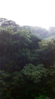 a cage of rain.